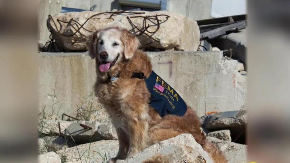 Dog Hero 9/11 Dog