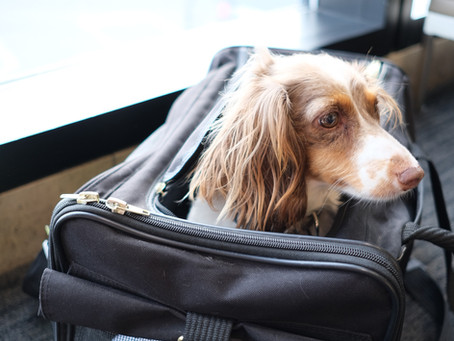Step by Step Guide to Flying with your Pet