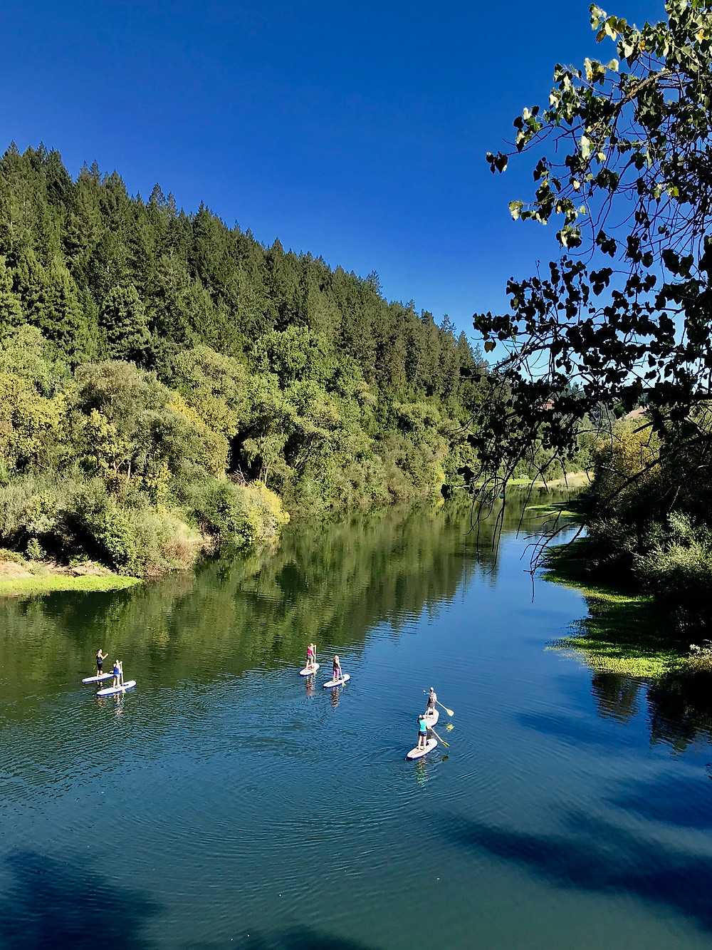 a group of people stand up paddle boarding the Russian River in California's Wine Country