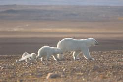 Жаркое солнце Арктики