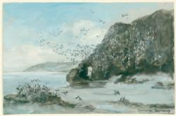 Een zwerm alken op rotsen bij Nova Zembla, 1880
