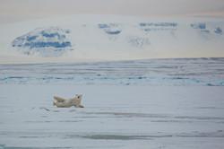 Арктическая зарядка