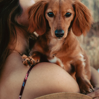 Cute dog portrait photoshoot in desert
