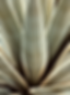 Aloe 2.png