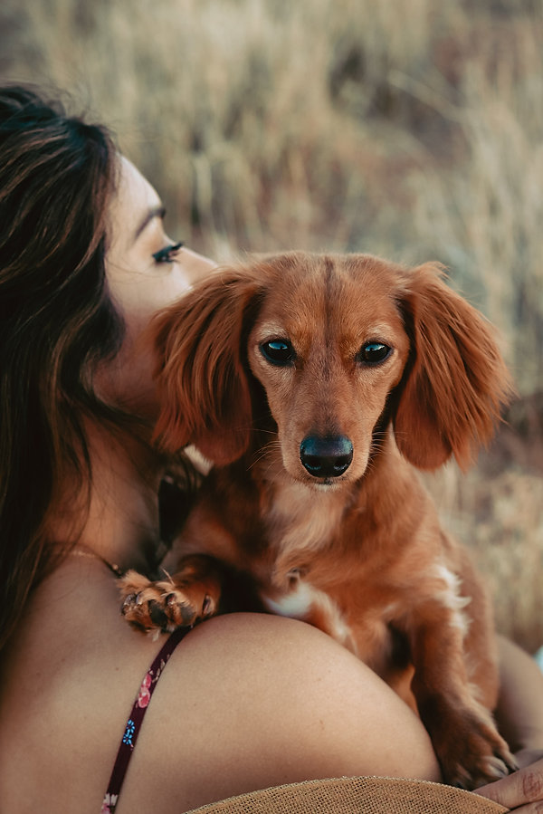 Cute dog portrait photoshoot in desert in Red Rock Canyon, Las Vegas, NV. Photo by Daniela Blagoeva outdoor portrait photographer based in Las Vegas, NV and Sofia, Bulgaria, available worldwide