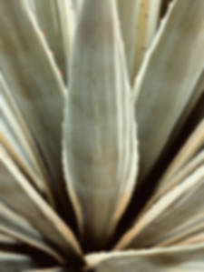 Agave plant wall art print
