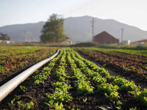 County Line Harvest 19.jpg