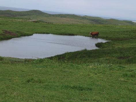 Marin Sun Farms 128 (1).jpg