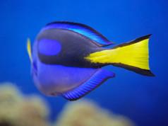 Monterey Aquarium 153 - Version 3.jpg