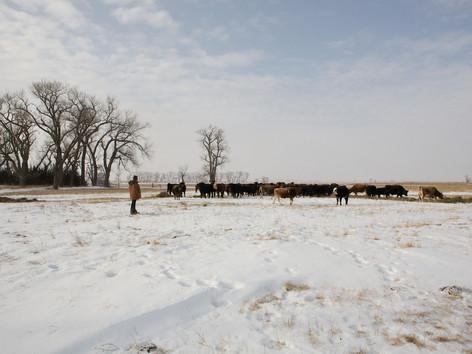 Nebraska 689.jpg