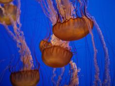 Monterey Aquarium 45.jpg
