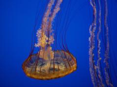 Monterey Aquarium 64.jpg