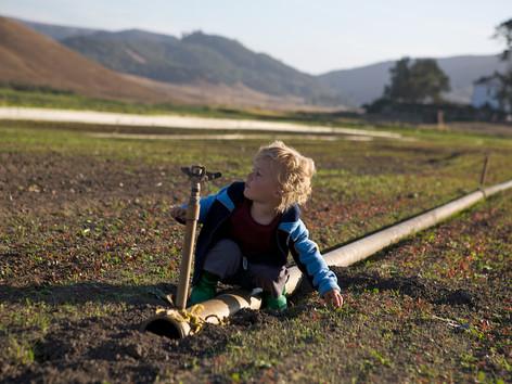 County Line Harvest 24.jpg