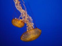 Monterey Aquarium 57 - Version 2.jpg