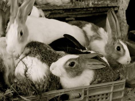 Rabbits II.jpg