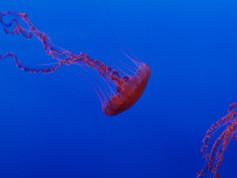 Monterey Aquarium 32.jpg