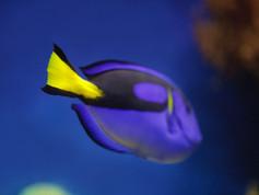 Monterey Aquarium 151 - Version 2.jpg