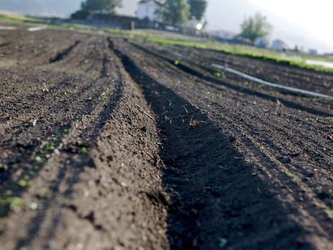 County Line Harvest 37 - Version 2.jpg