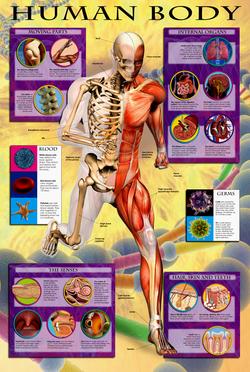 Body_poster