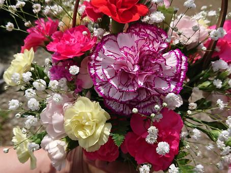 Potted flower arrangements