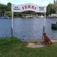 Dog Waiting for Ferry.jpg