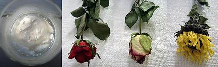 dry_flower.jpg