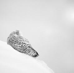Face au blizzard