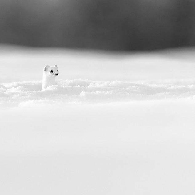 Le petit périscope