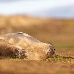Sieste dans les herbes