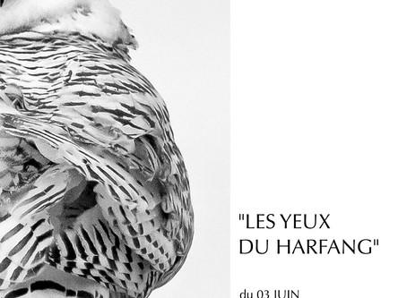 """""""Les Yeux du harfang"""" exposés à la         iD POD Galerie de Brest..."""