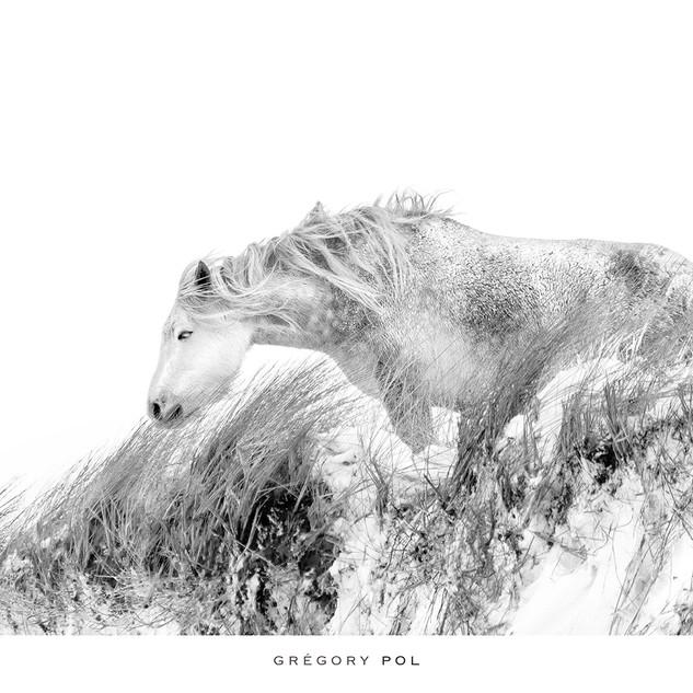 Cheval blanc dans la tourmente