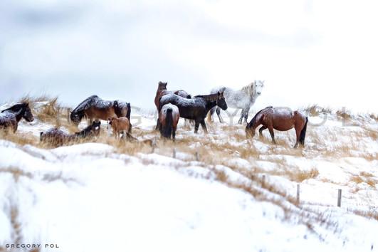 """""""Les chevaux de Langlade"""" remportent le 3ème prix au concours """"Le cheval et la nature"""