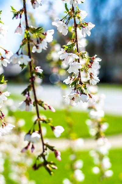 Spring_2.jpg