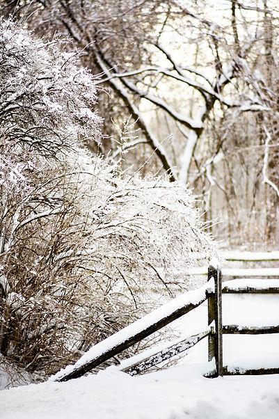 Snowyday_11.jpg