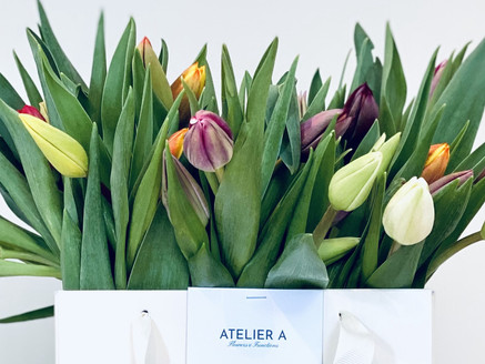 MUCH ADO ABOUT TULIPS