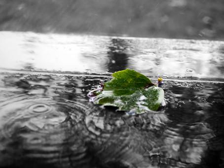 Rain, Rain, Go Away .....