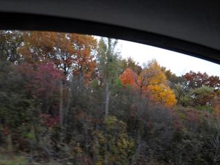 Autumn Colors Flowing Past My Window