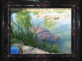 The Hippopotamus In The Room