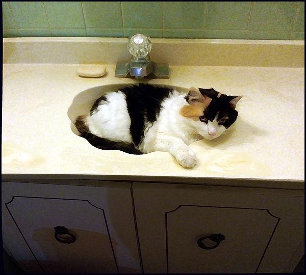 Margaret Cat Naps In My Guest Bathroom S
