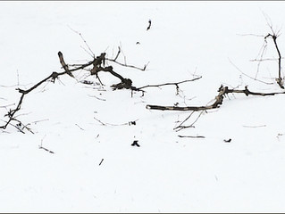 Broken Branches—Broken Life Chances