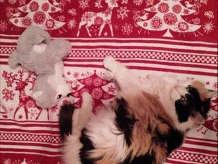 A Stuffed Toy She Likes