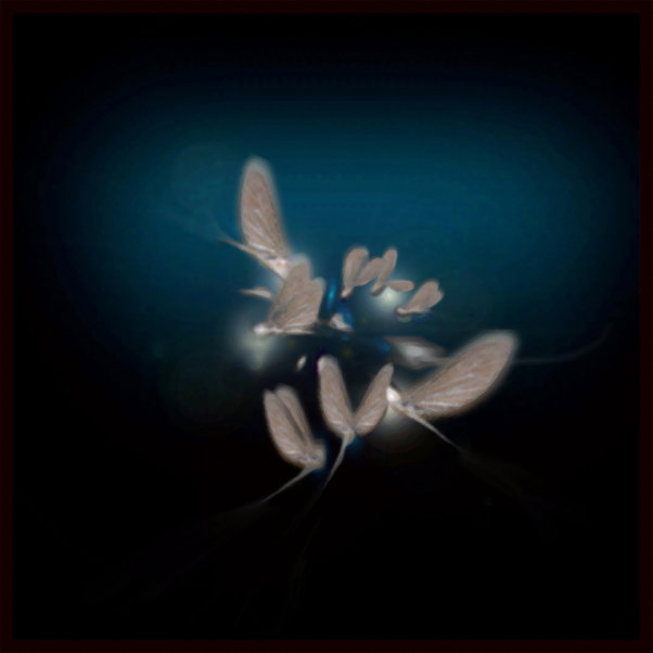 Mayfly For A Day by Annmarie Throckmorto