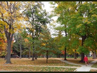 Change Of Season Into Autumn