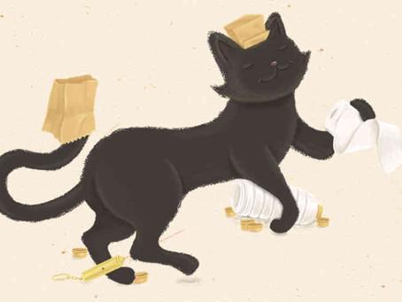 5 objetos irresistibles para gatos