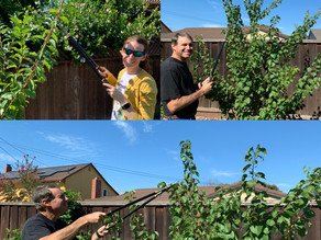 Pinch Pruning, an Urban Orchard Technique!