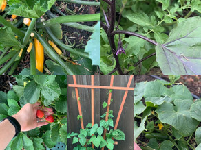 The Garden process (for health and happiness).