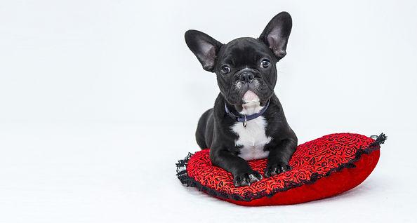 bulldog-1047518_1920.jpg