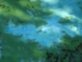 bg algae3.jpg