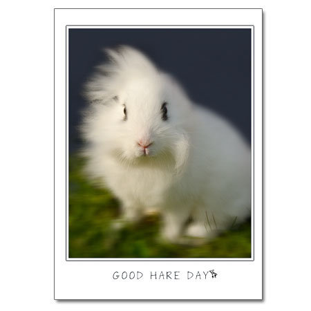Good Hare Day