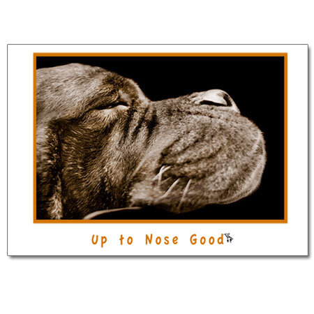Nose Good